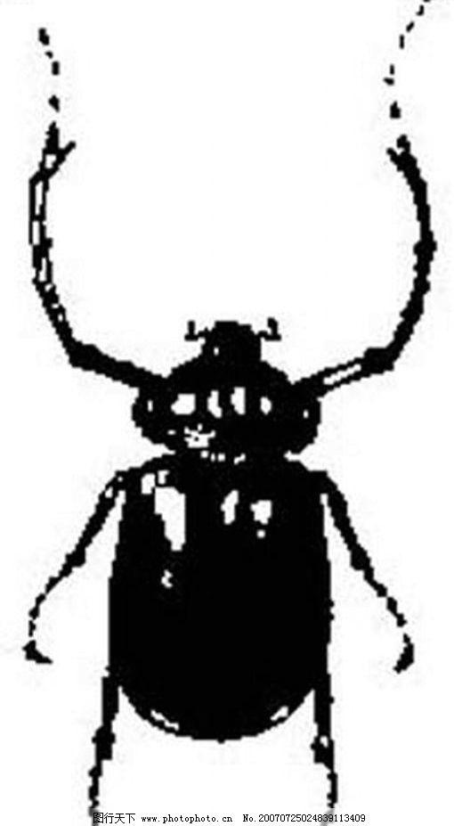 昆虫矢量图 昆虫 黑白昆虫 黑白矢量图 黑白素材 黑白画 黑白图 矢量