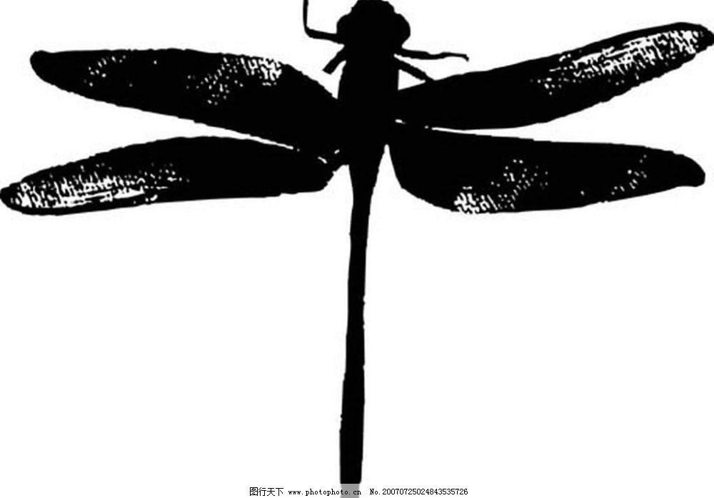 蜻蜓矢量图 昆虫 黑白昆虫 黑白矢量图 黑白素材 黑白画 黑白图 矢量