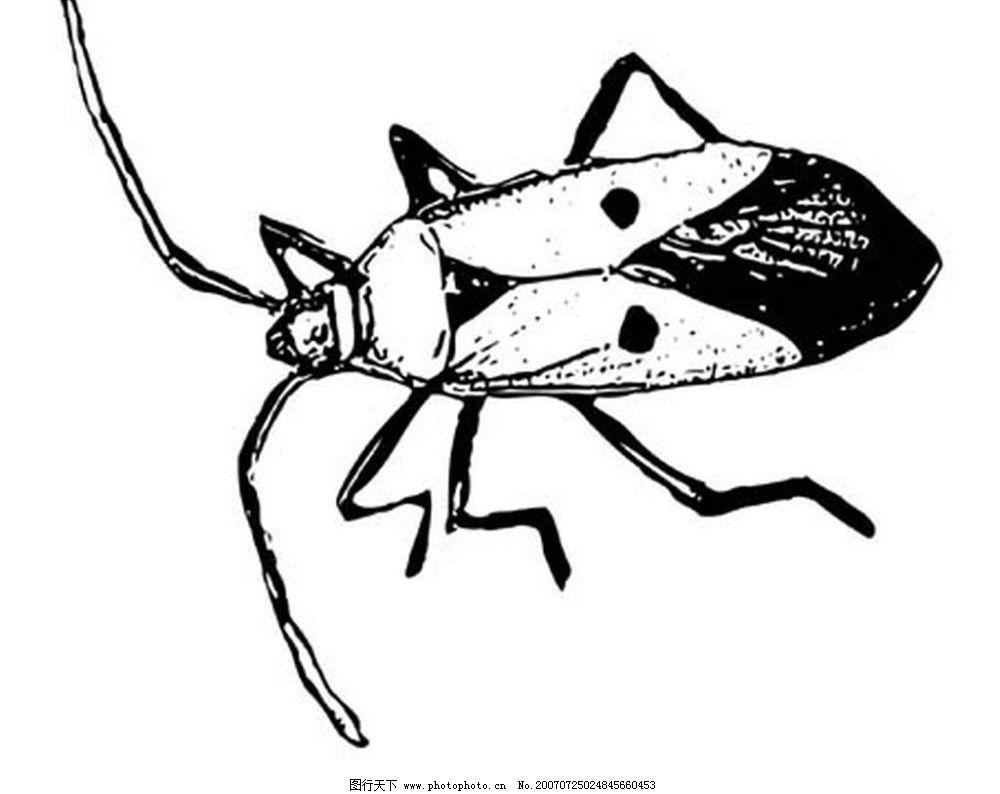蟑螂 昆虫 黑白昆虫 黑白矢量图 黑白素材 黑白画 黑白图 矢量 生物世
