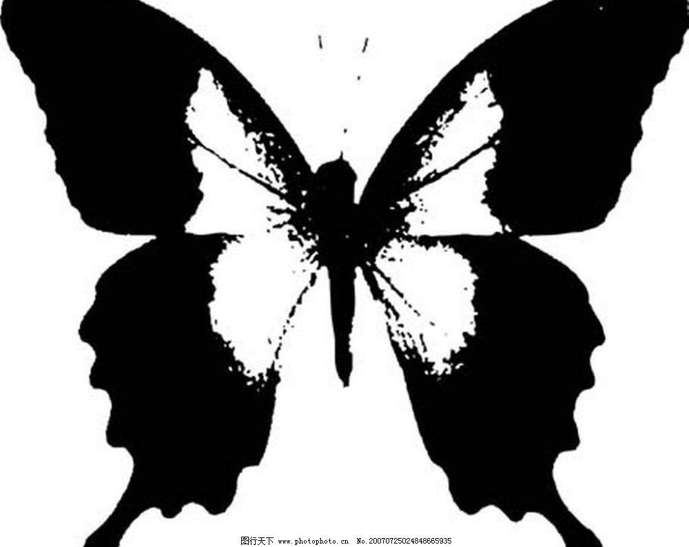蝴蝶 黑白昆虫 黑白矢量图 黑白素材 黑白画 黑白图 黑白昆虫矢量图