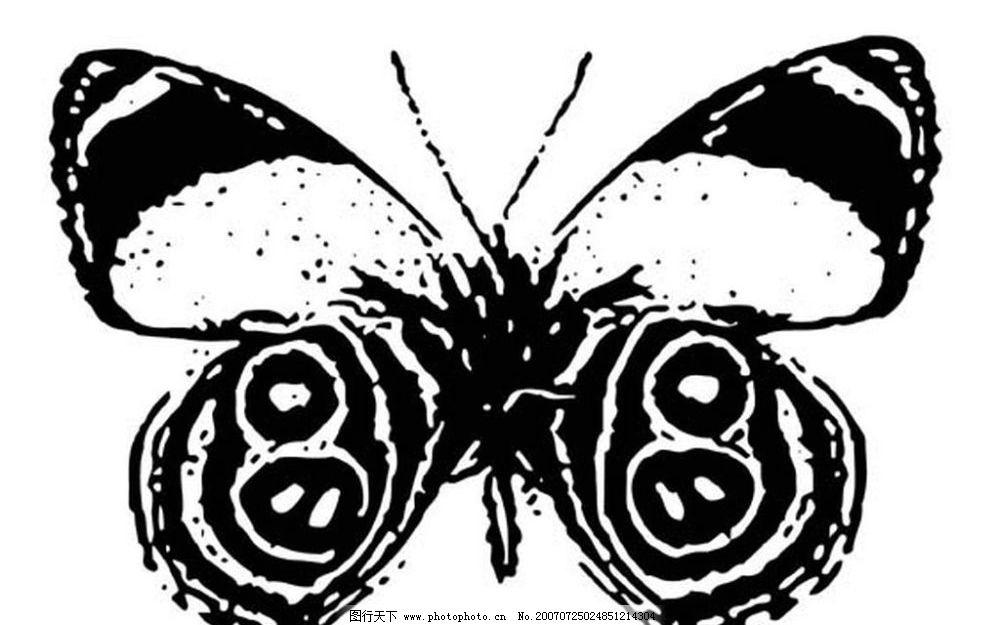 蝴蝶 昆虫 黑白昆虫 黑白矢量图