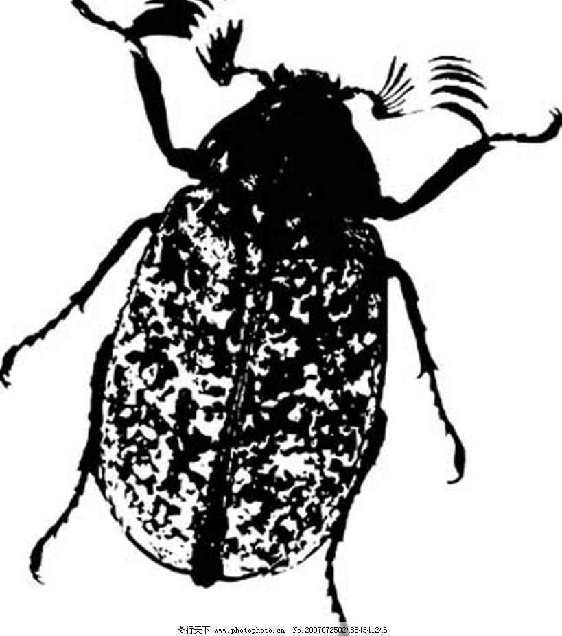 甲壳虫 昆虫 黑白昆虫