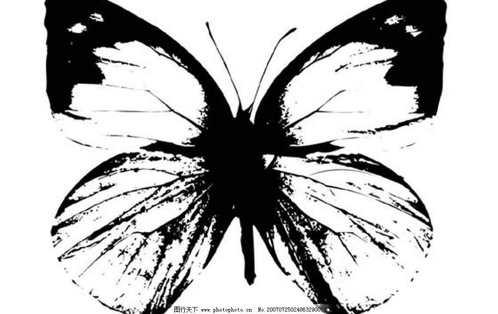 黑白蝴蝶 黑白昆虫 黑白矢量图 黑白素材 黑白画 黑白图 黑白昆虫矢量