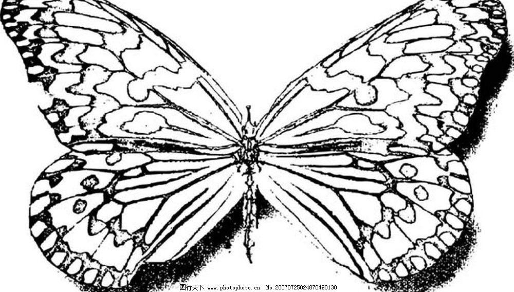 蝴蝶的矢量图图片