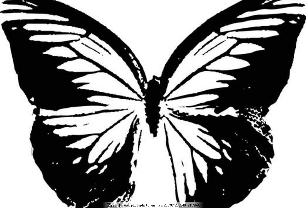 蝴蝶的 黑白昆虫 黑白矢量图 黑白素材 黑白画 黑白图 黑白昆虫矢量图