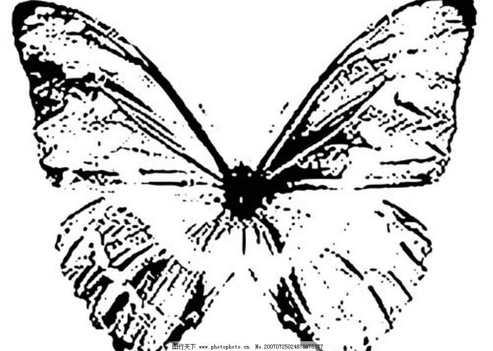蝴蝶素材 昆虫 黑白昆虫