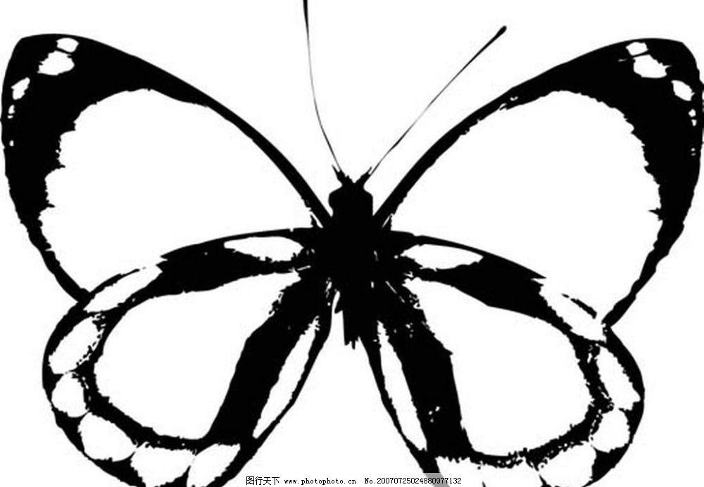 蝴蝶黑白矢量 黑白昆虫 黑白素材 黑白画 黑白图 黑白昆虫矢量图
