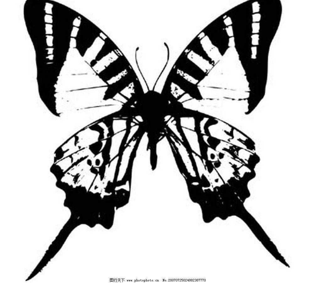 蝴蝶黑背素材 蝴蝶 昆虫 黑白昆虫 黑白矢量图 黑白素材 黑白画 黑白