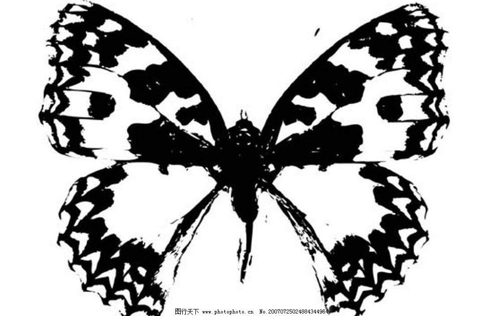 蝴蝶矢量 黑白昆虫 黑白矢量图 黑白素材 黑白画 黑白图 黑白昆虫矢量
