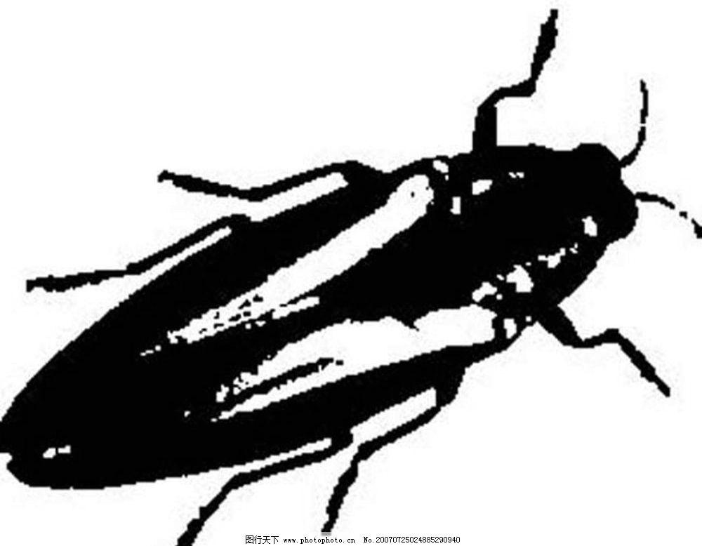 蟑螂素材 昆虫 黑白昆虫 黑白矢量图 黑白素材 黑白画 黑白图 矢量 生