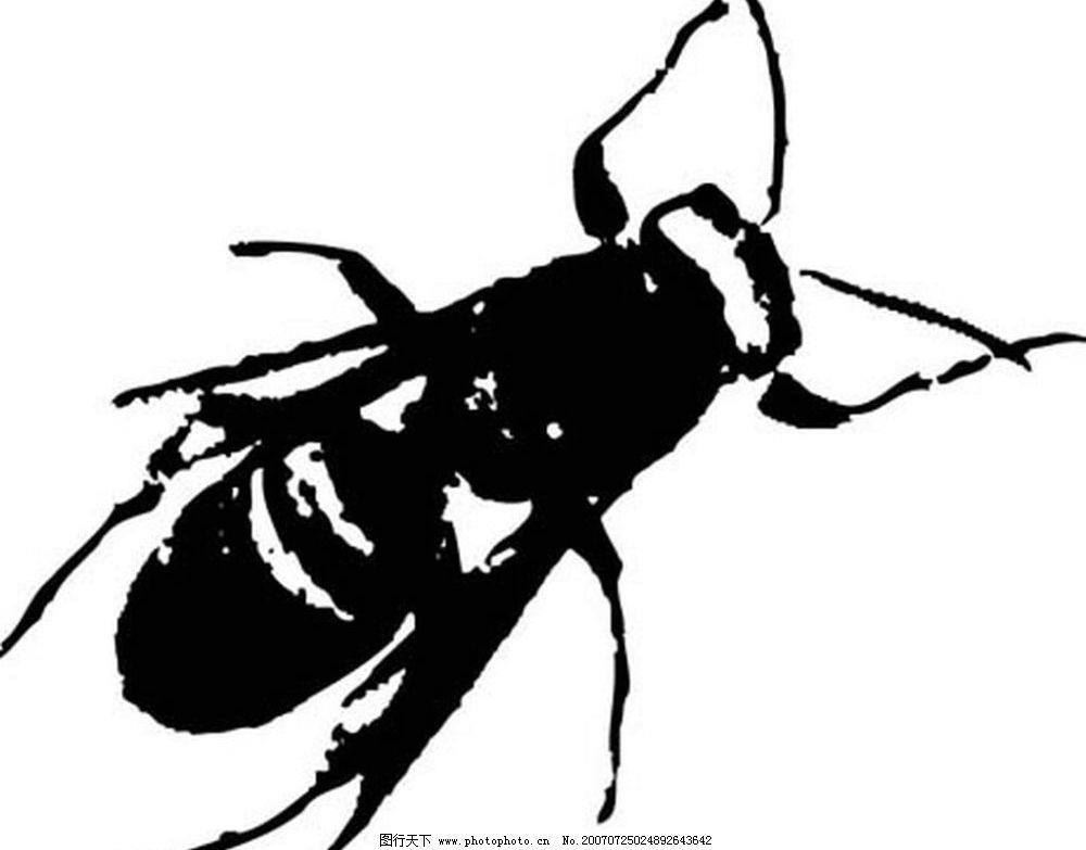 苍蝇 昆虫 黑白昆虫 黑白矢量图 黑白素材 黑白画 黑白图 矢量 生物