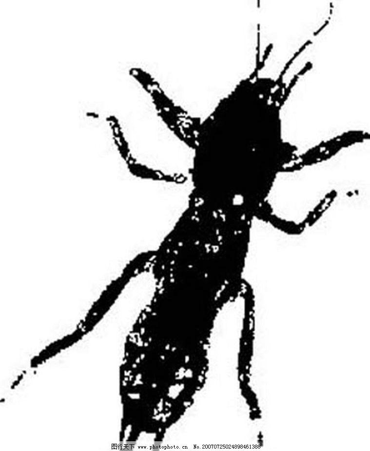 黑白矢量图 黑白素材 黑白画 黑白图 矢量 生物世界 黑白昆虫矢量图