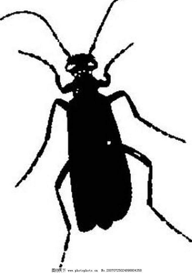 昆虫素材 昆虫 黑白昆虫 黑白矢量图 黑白素材 黑白画 黑白图 矢量