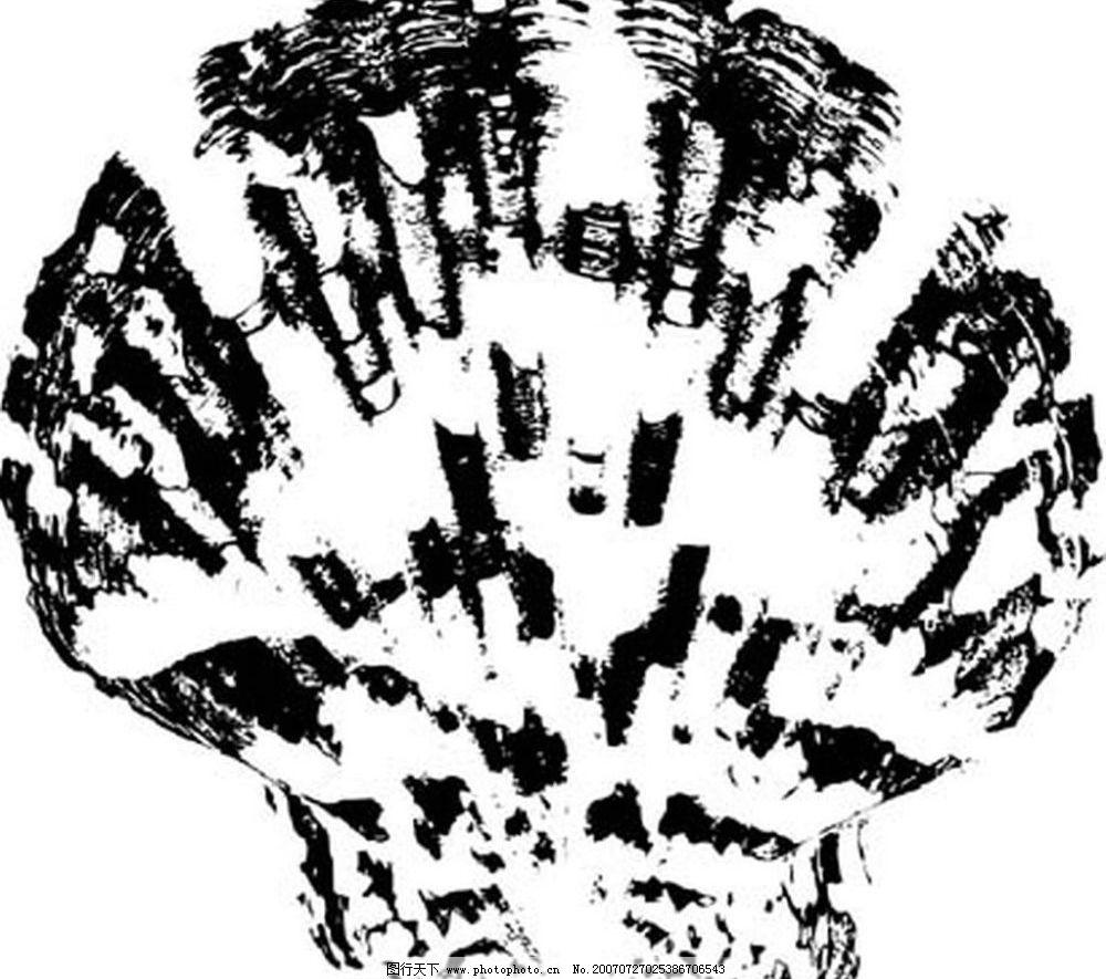 海螺贝壳黑白