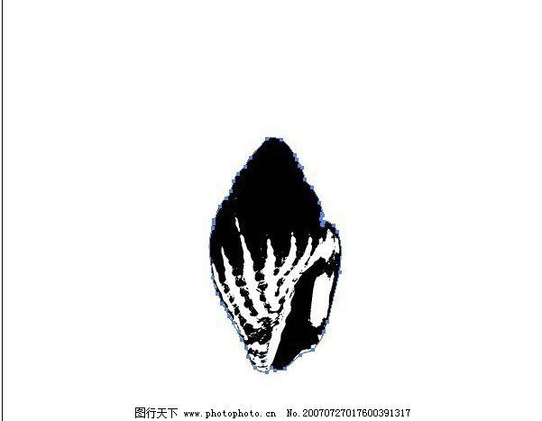 黑白贝壳 海螺 画 黑白图 矢量黑白图 黑白矢量图 生物世界 海洋生物