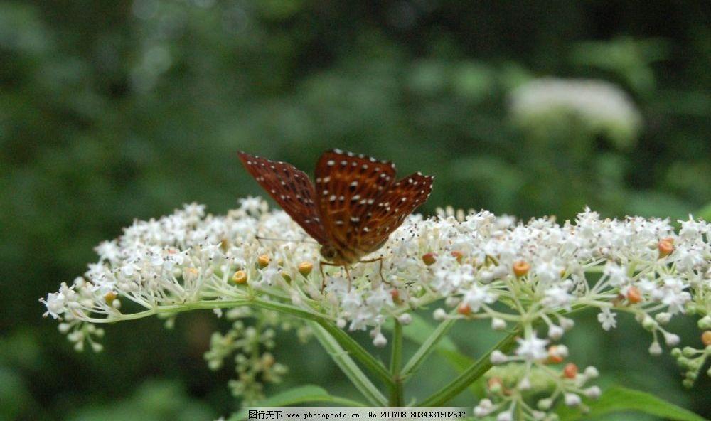 蝴蝶与花朵 自然景色 蝴蝶 自然景观 风景图片 体验自然的风光 摄影