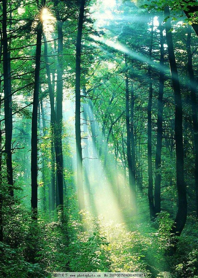 清晨树林阳光图片