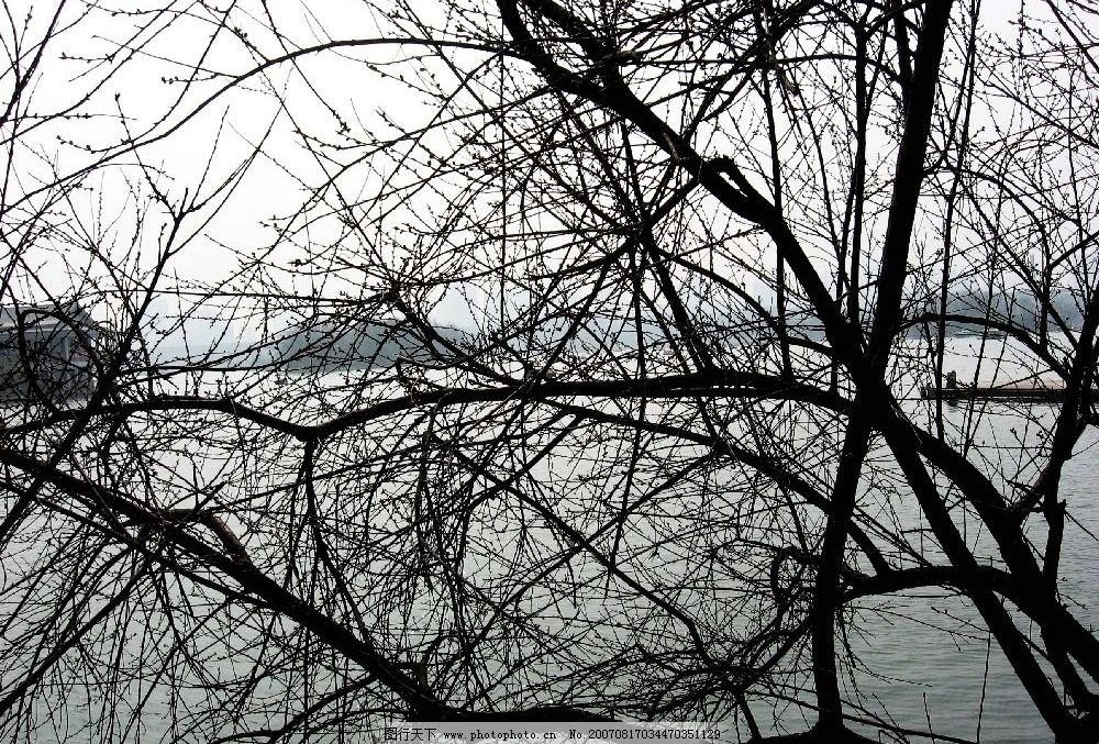 树枝 树木 树 自然景观 山水风景 林木 摄影图库 180dpi     180