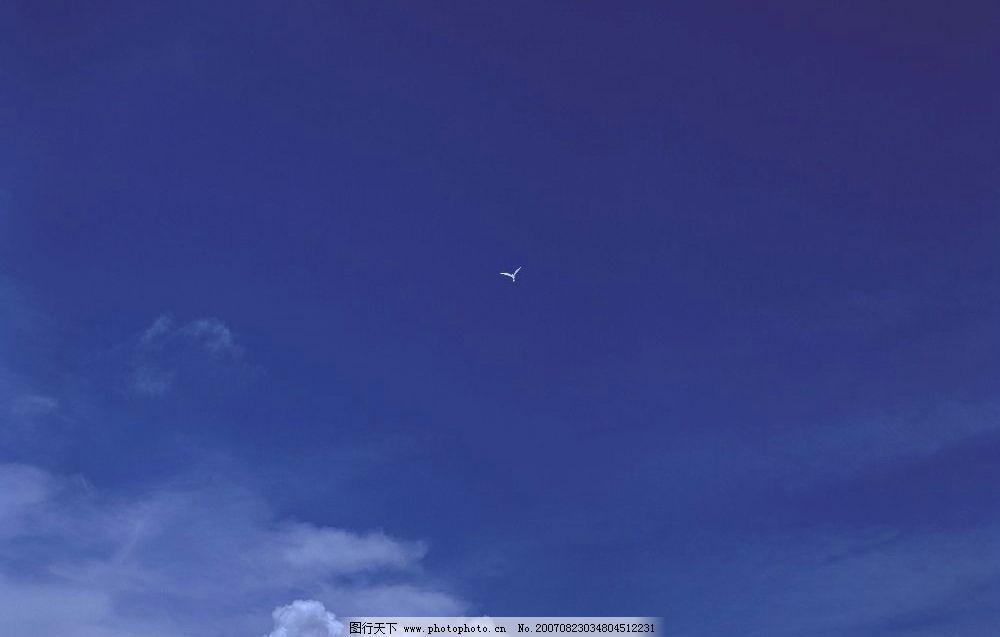 蓝天白云 海鸥图片