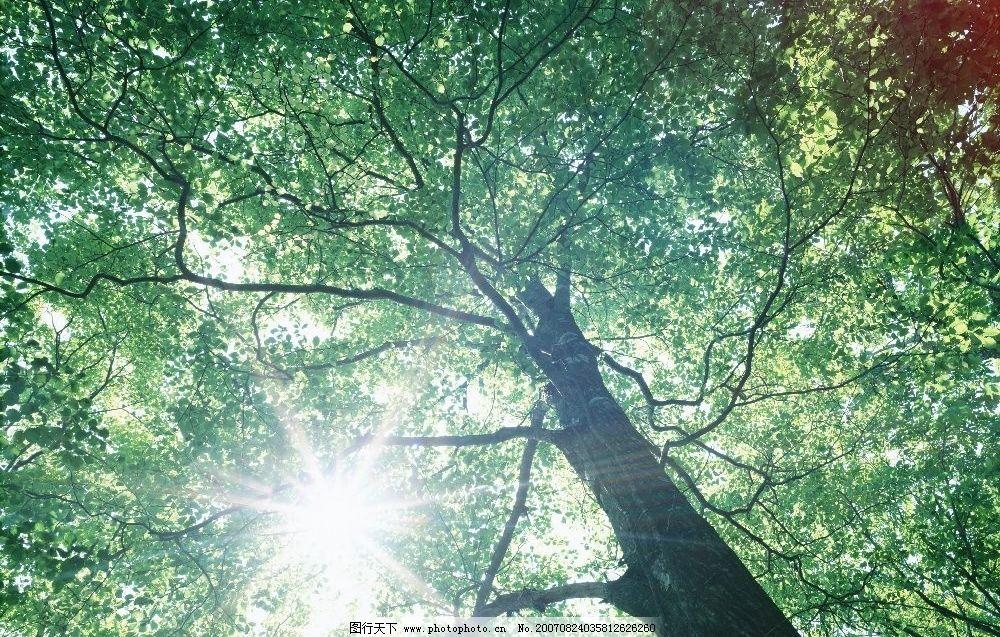 阳光树林图片