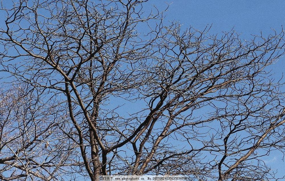 树梢 树木 树林 树 植物 生物世界 花草树木 摄影图库 350dpi
