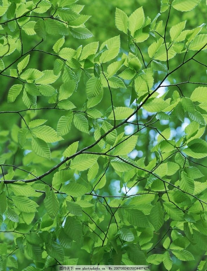 树叶 森林 树木 树 树林