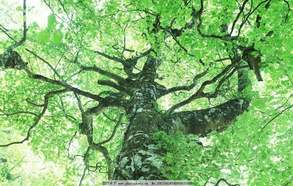 树木 树 植物 树木图 树木素材 森林图片 摄影图 生物世界 森林树木