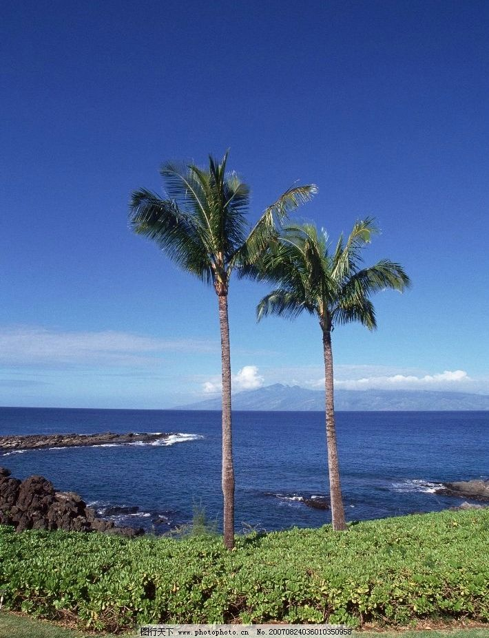 海边的椰子树 大海 海洋 海水 摄影图 其他生物 海边植物 摄影图库