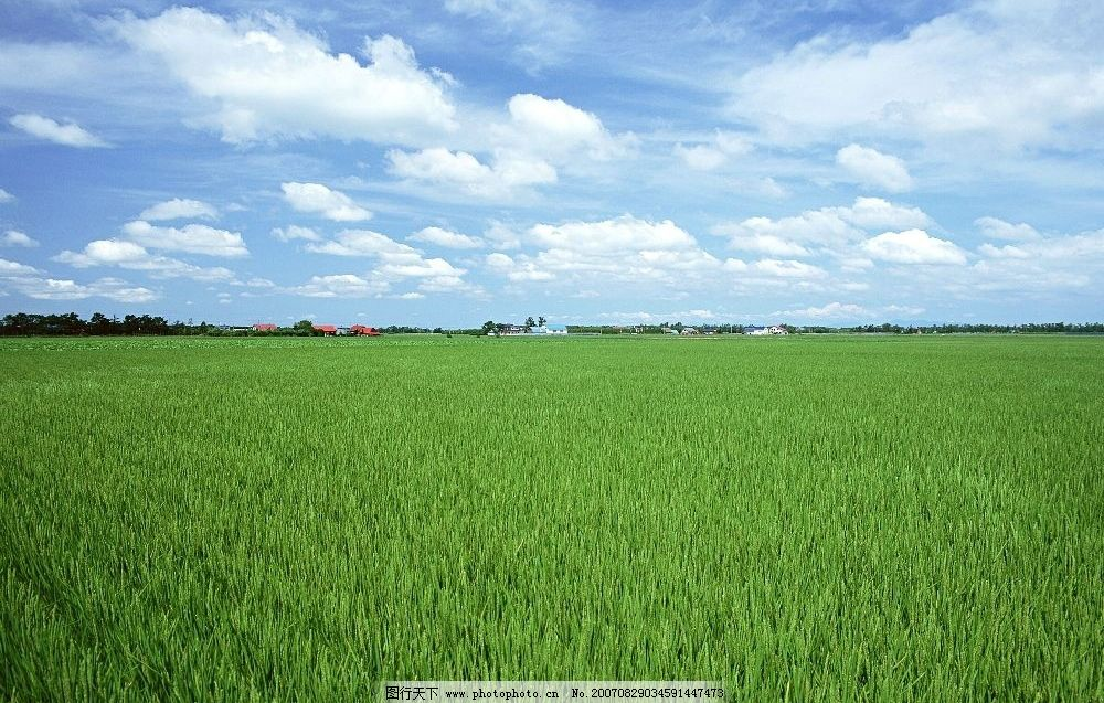 绿色稻田 田园风光图片 田园摄影 田园风景 摄影图 摄影图库