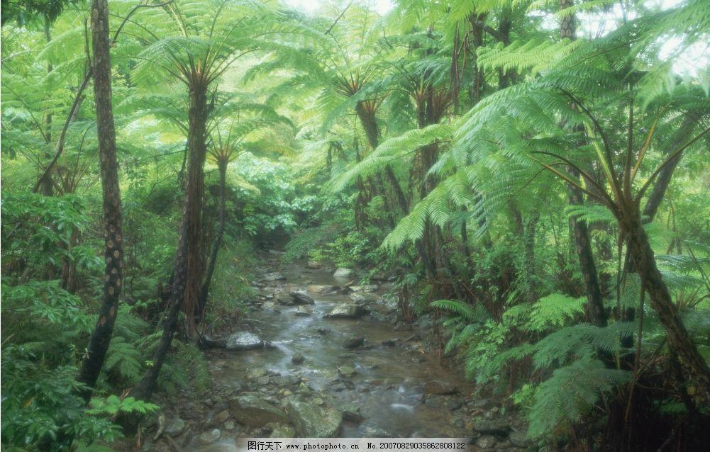 树林小溪图片