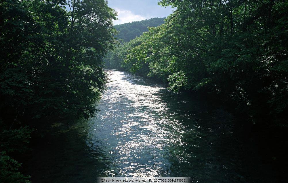 流水 小溪流水 流水图片 树林 树木 树 摄影图 自然景观 山水风景
