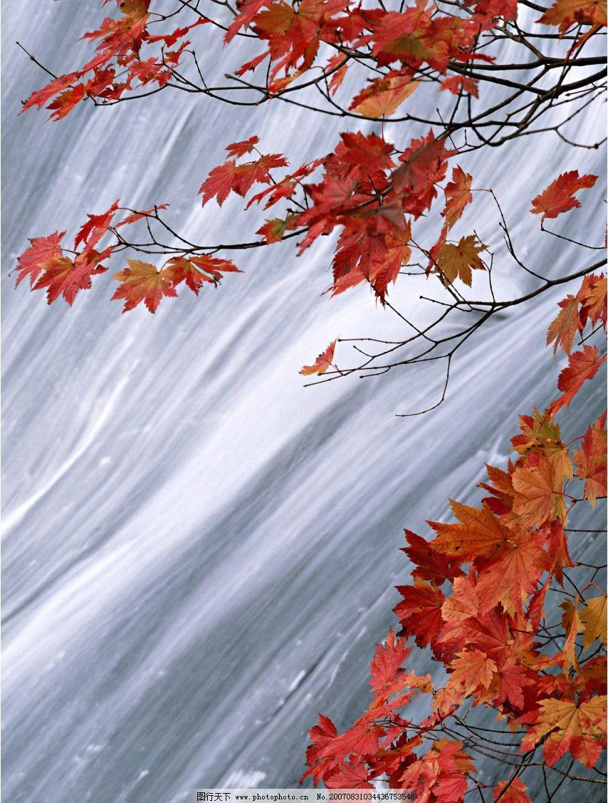 红枫叶 瀑布 流水 森林瀑布 瀑布图片 瀑布风景 摄影图 自然景观 山水