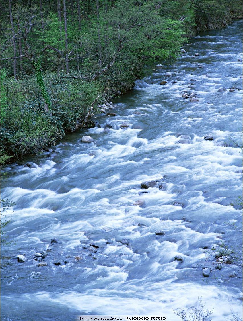 小溪流 流水 小溪流水 流水图片 树林 树木 树 摄影图 自然景观 山水