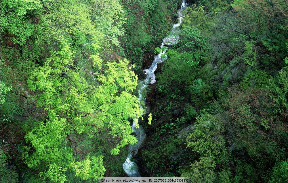 山谷流水 流水 小溪流水 流水图片 树林 树木 树 摄影图 自然景观
