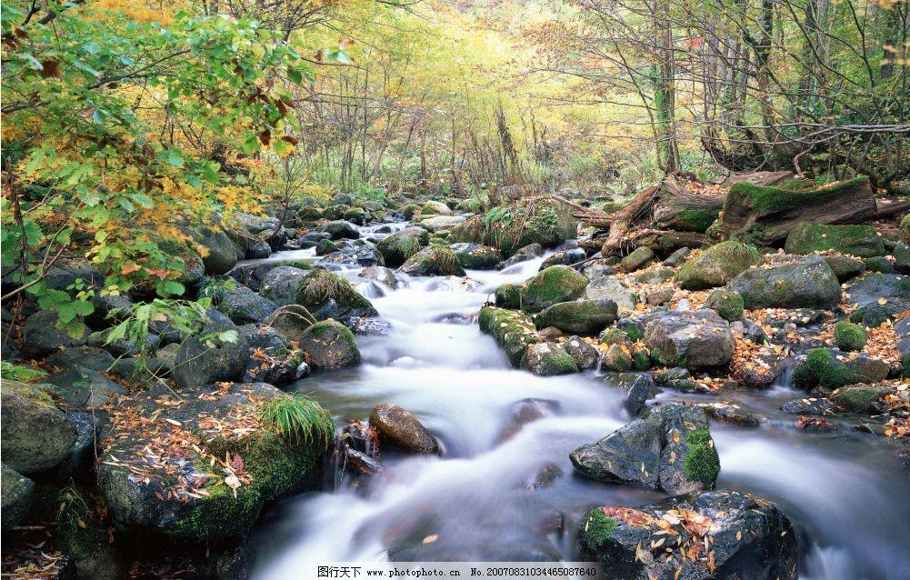 林间溪流 流水 小溪流水 流水图片 树林 树木 树 摄影图 自然景观
