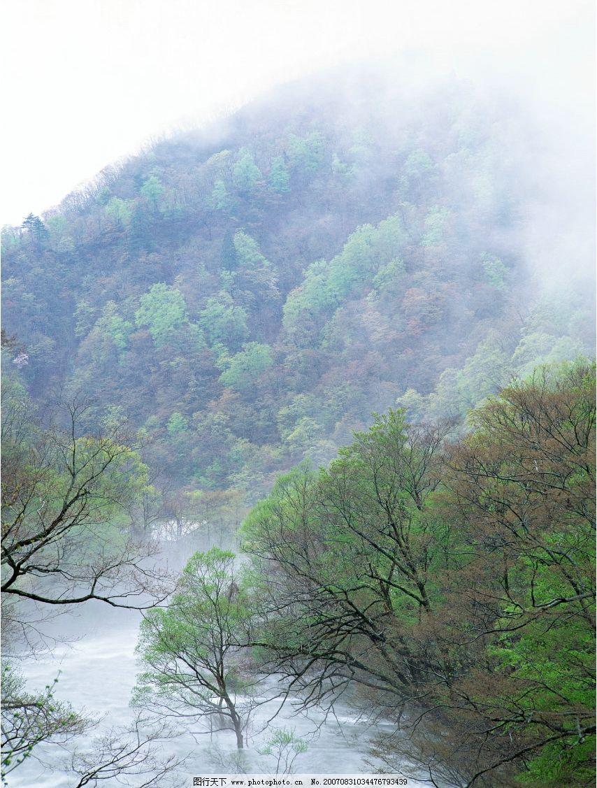山间溪流 流水 小溪流水 流水图片 树林 树木 树 摄影图 自然景观