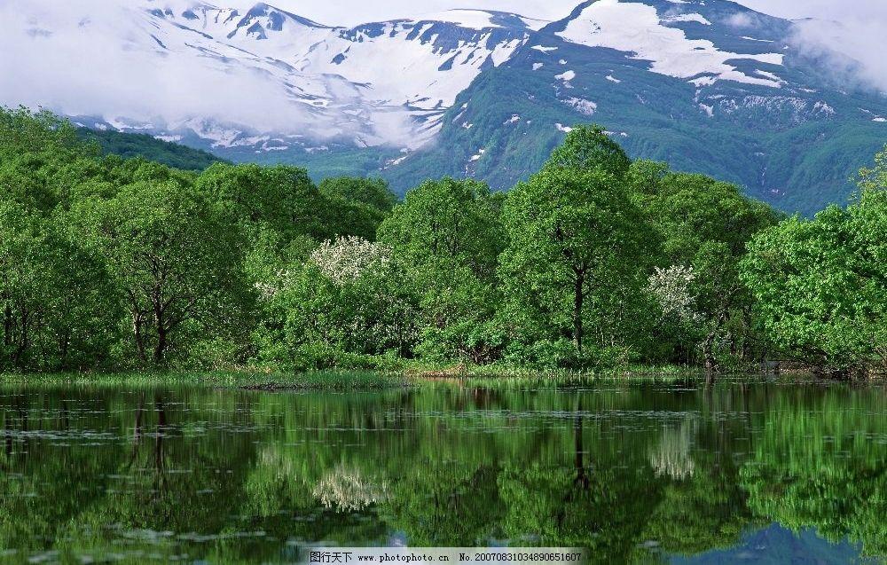 水和树icon