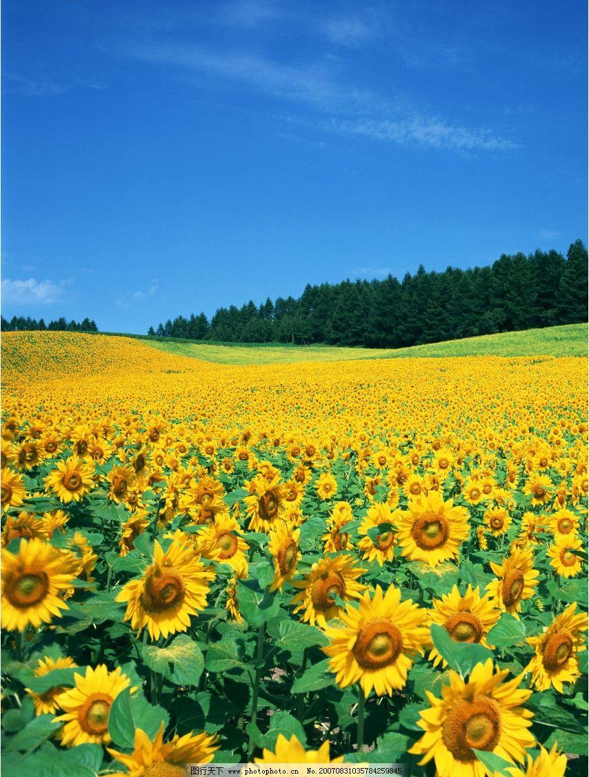 花卉壁纸 园林花卉 花卉的图片 花卉摄影 摄影图 生物世界 花卉风景