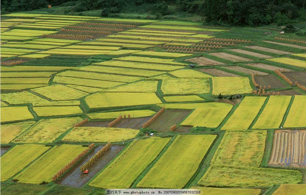 农田俯视图片_田园风光_自然景观_图行天下图库