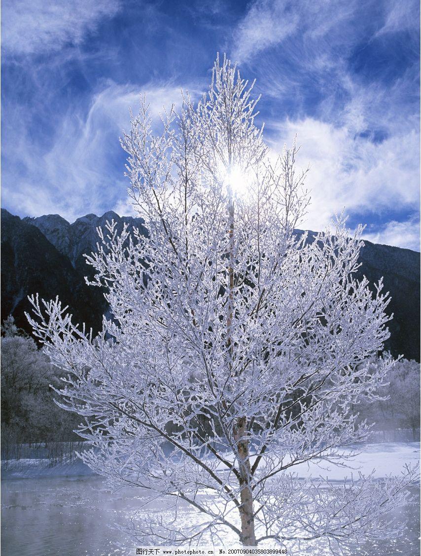 雪中树木 灌木 树木 树 植物 树木图 树木素材 树木的图片 摄影图
