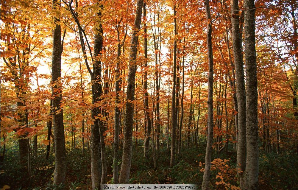 秋天的树林 树林树木 灌木