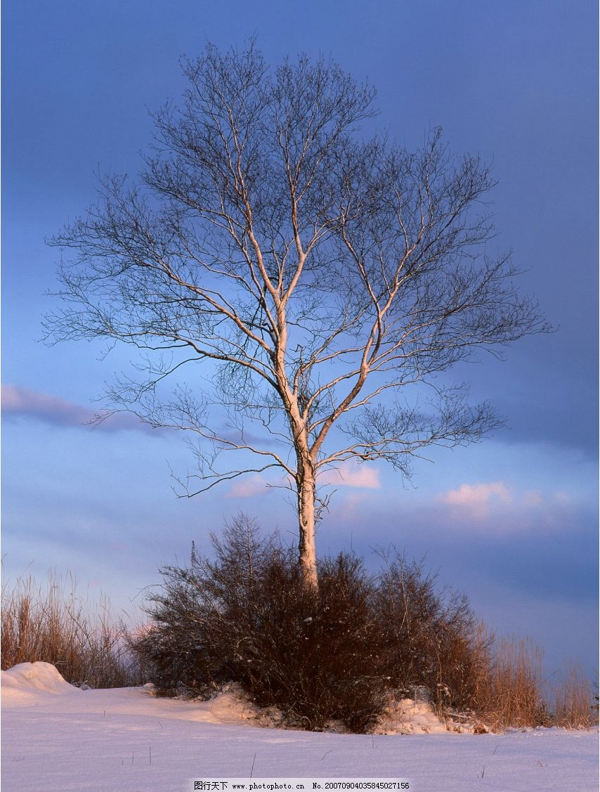 孤独的树木图片_树木树叶_生物世界_图行天下图库