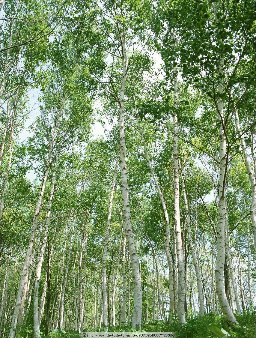 阳光树林 灌木 树木 树 植物 树木图 树木素材 树木的图片 摄影图