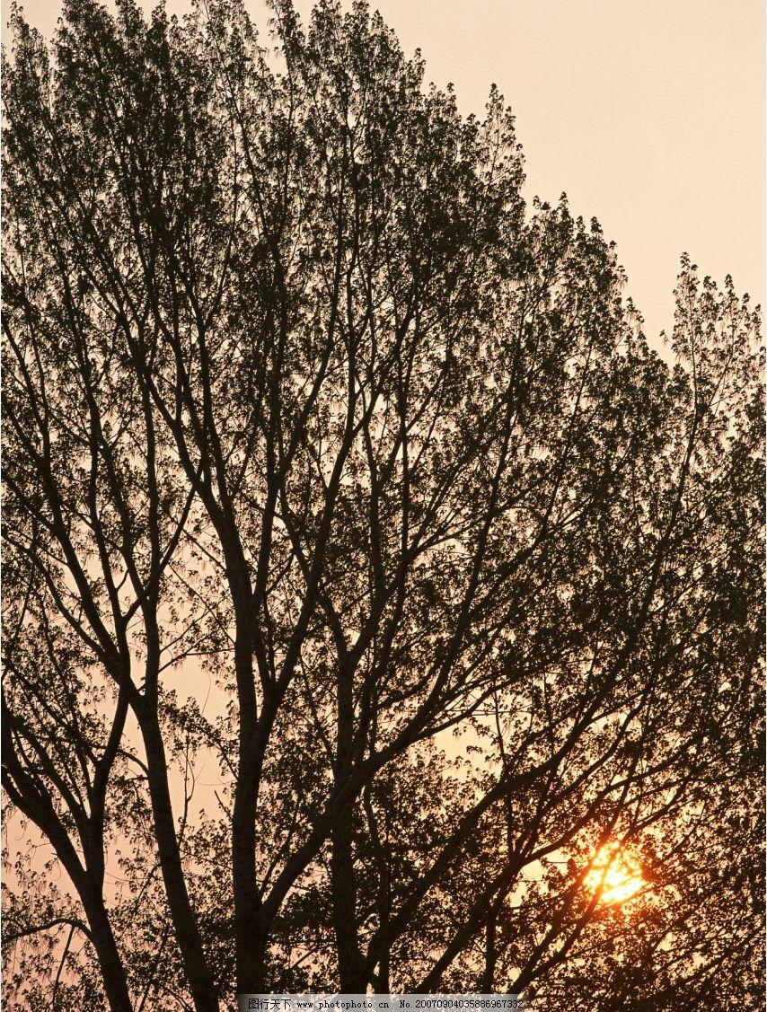 树木图 树木素材 树木的图片