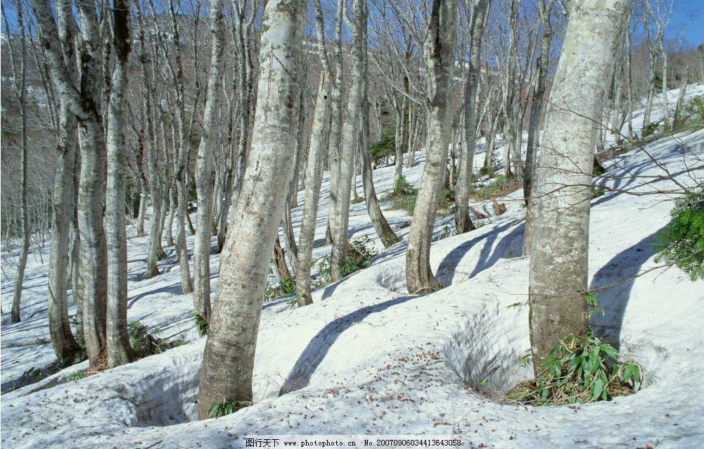 树林雪景 雪景 树木 冬天 冬季 自然景观 山水风景 四季风景 摄影图库