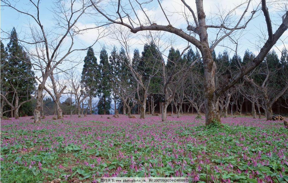 野花树林 花草 花卉 花朵 树木 四季风景 摄影图库