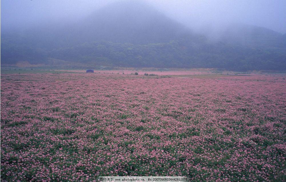 花卉 花草 花朵 树林 树木 四季风景 摄影图库