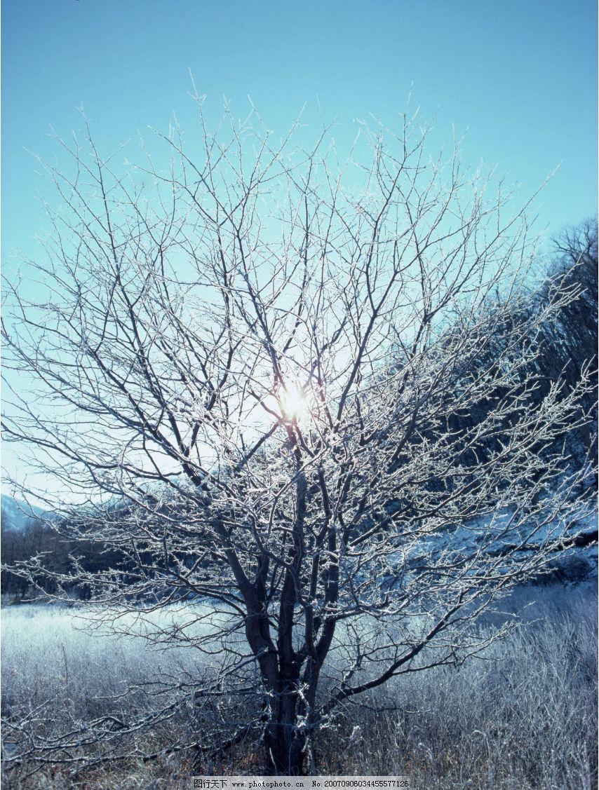 冰雪树木 树林 树木 冬天 冬季 自然景观 山水风景 四季风景 摄影图库