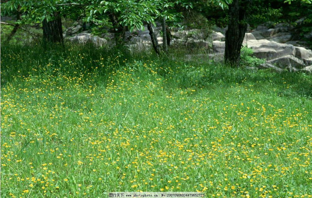 春天野花 花草 花卉 花朵 花 自然景观 山水风景 四季风景 摄影图库