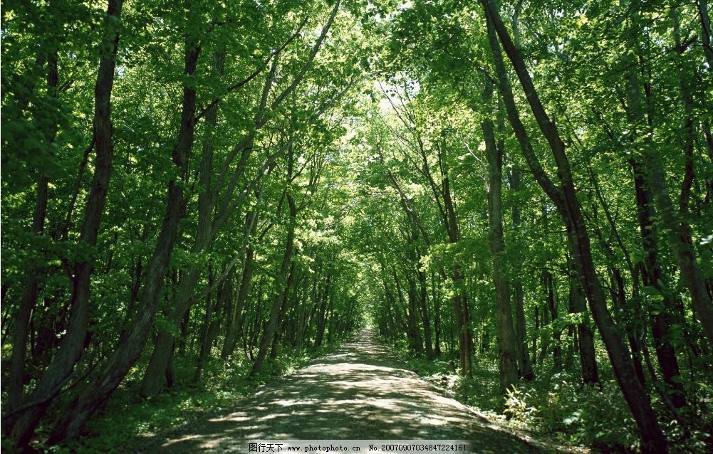 林间小路 绿色森林 森林 树林 森林图片 树林图片 自然景观 自然风景
